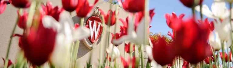 UW crest in the background of red and white tulips