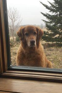 dog waiting outside